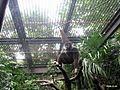 上野動物公園, Ueno Zoo(Ueno Zoological Gardens) - panoramio (4).jpg