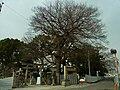 布忍神社 松原市北新町2丁目 Nunose-jinja 2012.1.14 - panoramio.jpg
