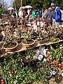 毘沙門天大祭 - panoramio - gundam2345 (14).jpg