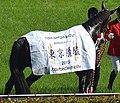 第82回東京優駿で優勝馬用の馬着を着装した勝利馬ドゥラメンテ.JPG