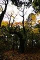 阿寺城 御嶽神社 登山道 - panoramio (4).jpg