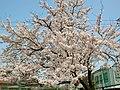 麻里布公園 - panoramio (1).jpg