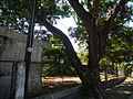 0031jfHighway Churches Hermosa Dinalupihan Bridges Bataan Landmarksfvf 03.JPG