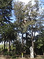 00 Badalona - Parc de Can Solei i Ca l'Arnús 19.JPG