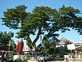 02584fvfBarangays Poblacion Stephen Academy Church Town Laur Nueva Ecijafvf 37.JPG