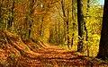 032529 (Лес, деревья, осень, листья).jpg