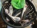 06586jfCandaba, Pampanga Market Fishes Foods Landmarksfvf 01.jpg