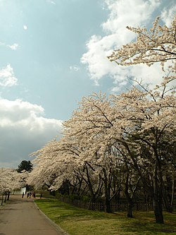 090422八戸公園 - panoramio.jpg