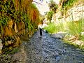 11 Wadi Bin Hammad Tropical Rain Forest Trail - There Is Plenty of Water in the Wadi - panoramio.jpg