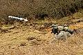 173rd Airborne Brigade - Grafenwoehr Training Area (16761120652).jpg