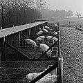 1960 domaine de Laizerie à Vaux sur Aure (Calvados)-9-cliche Jean Joseph Weber.jpg