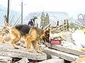 2008년 중앙119구조단 중국 쓰촨성 대지진 국제 출동(四川省 大地震, 사천성 대지진) SSL27394.JPG