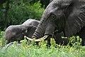 20090507-TZ-NGO Safari 330 (4678000170).jpg
