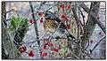 2012,12,12 Sjagger på gennemtræk - panoramio.jpg