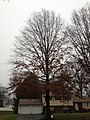 2014-12-24 15 14 44 Pin Oak along Van Duyn Drive in Ewing, New Jersey.JPG