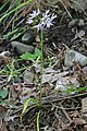 2015.06.06 09.39.39 IMG 2616 - Flickr - andrey zharkikh.jpg
