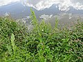 2015.09.05 12.26.51 DSC00302 - Flickr - andrey zharkikh.jpg