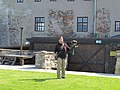2017-09-09 (143) Falconry at castle Oberkapfenberg, Austria.jpg