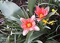 20170402 15 Frühlingsblumen.jpg