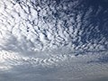 2021-07-10 18 42 30 Altocumulus clouds above a field in the Dulles section of Sterling, Loudoun County, Virginia.jpg