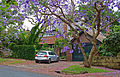 26 Springdale Road, Killara, New South Wales (2010-12-04) 01.jpg