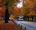 3573 Beech Trees, The Promenade (8176294788).jpg