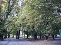 """44.""""Ogród Saski w Łowiczu.jpg"""