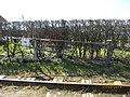 5610 Assens, Denmark - panoramio (11).jpg