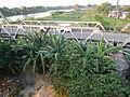 5813jfSulipan Bridge Apalit Pampangafvf 34.JPG