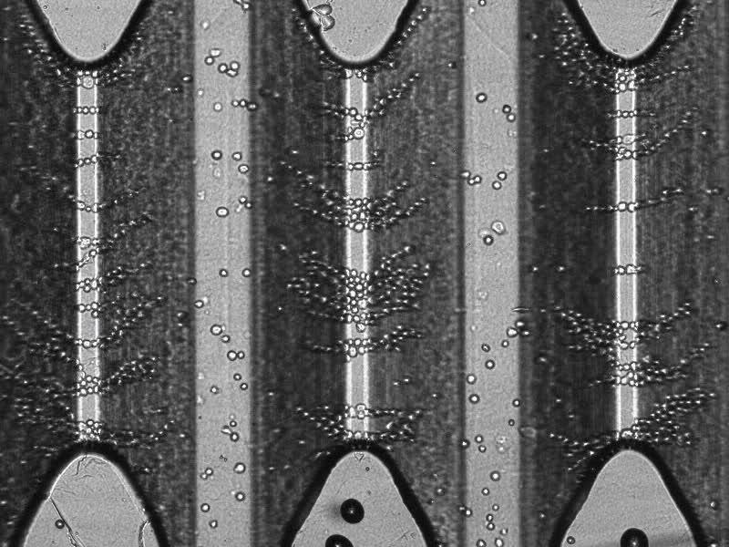 Dielectrophoresis - Wikipedia