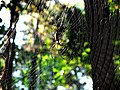 ALL SPIDERS SPIN SILK, BUT NOT ALL SPIDERS SPIN WEBS.jpg