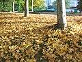 A Coruña, plaza del Tebeo, parque en otoño - panoramio.jpg