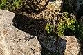 A Lizard near the Old Cape Point Lighthouse.jpg