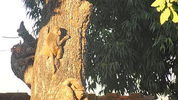 A money having sun bath on a tree.jpg