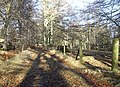 A woodland track to Pitmurchie House - geograph.org.uk - 1133071.jpg