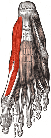 abductor hallucis muscle