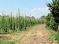 Access track for hop gardens - geograph.org.uk - 454273.jpg