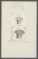 Actinia aster - - Print - Iconographia Zoologica - Special Collections University of Amsterdam - UBAINV0274 109 05 0027.tif