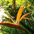 Adjuntas, 00601, Puerto Rico - panoramio.jpg