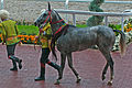 Ahal Velayat Hippodrome - Flickr - Kerri-Jo (31).jpg