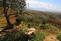 Al Ardha Sub-District, Jordan - panoramio (2).jpg