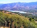 Albertacce lac de Calacuccia églantiers.jpg