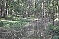 Alligator Slough.jpg