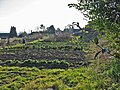 Allotments, White Hart Lane, St James, Shaftesbury, Dorset - geograph.org.uk - 142745.jpg