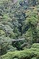 Altitude, canopy level of a rainforest.jpg