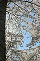 Amstelveen, Netherlands - panoramio (13).jpg