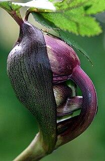 Plant morphology Part of botany