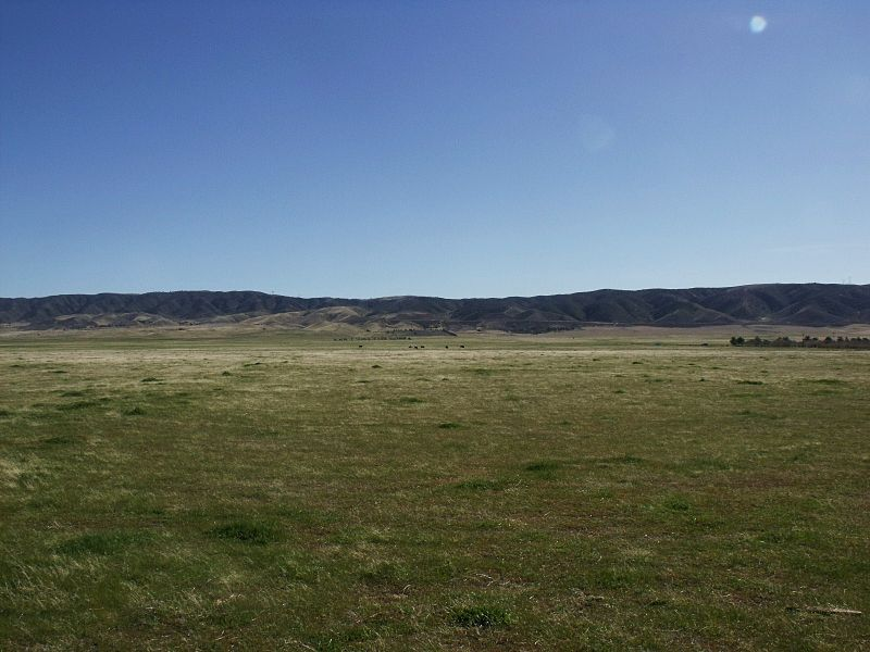 AntelopeValleyCAgrassland.JPG