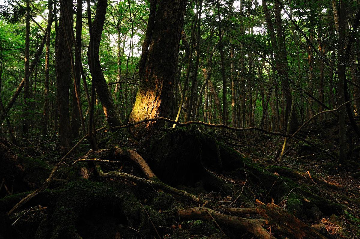 نتيجة بحث الصور عن غابة أوكيجاهارا
