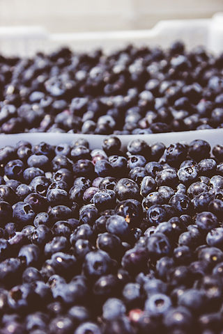 Blueberries By Romigraphy / Sitio web (Own work) [CC BY-SA 3.0 (http://creativecommons.org/licenses/by-sa/3.0)], via Wikimedia Commons